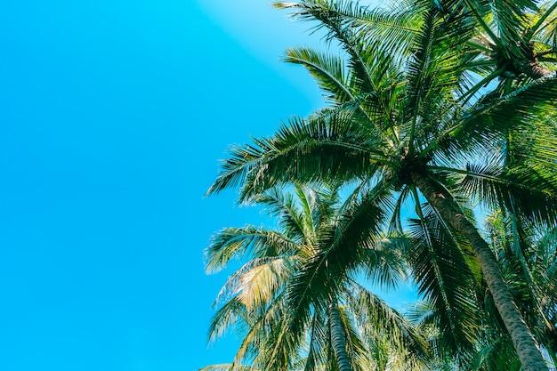 Colpo di angolo basso di bello albero del cocco su cielo blu