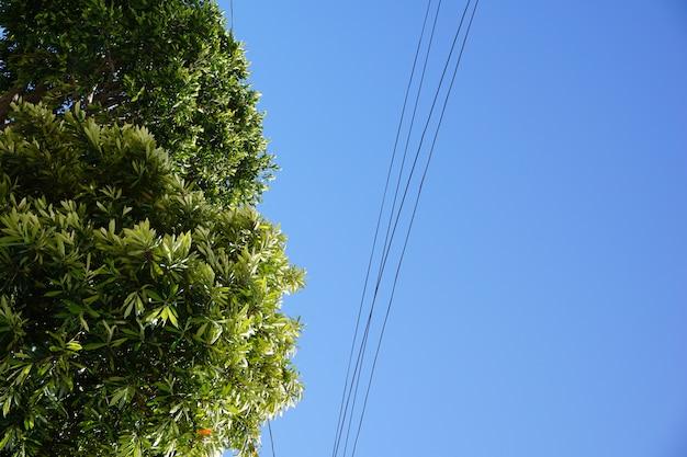 Colpo di angolo basso di un albero con un chiaro cielo blu nei precedenti al giorno