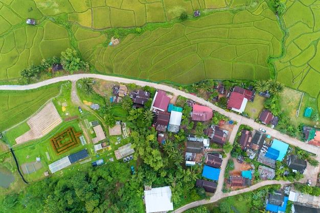 Colpo di drone vista aerea di bellissime risaie verdi in bella luce della natura al mattino e strada intorno al villaggio