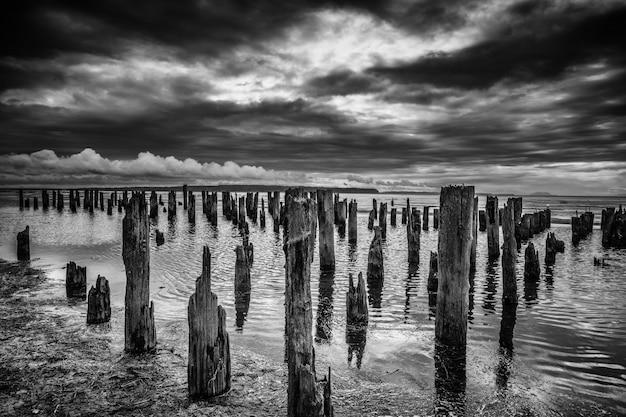 Colpo di gradazione di grigio di molti ceppi di legno nel mare sotto le nuvole di tempesta strabilianti