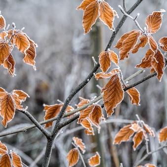 Colpo di messa a fuoco selettiva di rami con foglie di autunno ricoperte di brina
