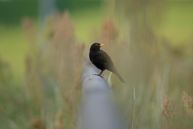 Colpo di messa a fuoco selettiva di un bellissimo uccello seduto su un tubo tra l'erba verde