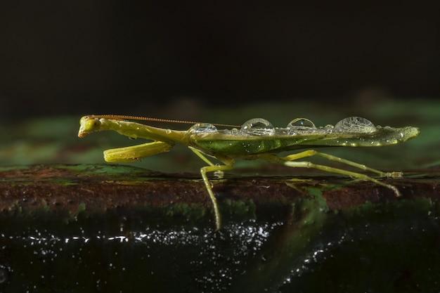 Colpo di messa a fuoco selettiva di un insetto alato verde in un ambiente naturale