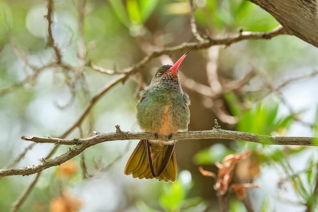 Colpo di messa a fuoco selettiva di un uccello esotico seduto su un ramo di un albero