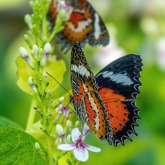 Colpo di messa a fuoco selettiva di una bellissima farfalla seduta su un ramo con piccoli fiori