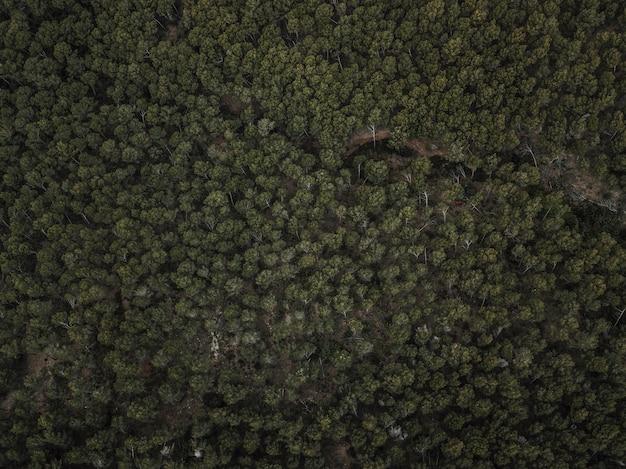 Colpo di telaio completo di alberi tropicali verdi