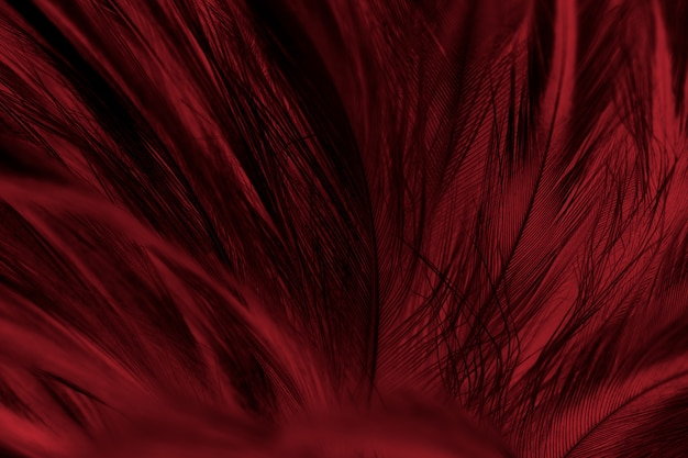 Colpo di telaio completo di piuma rossa