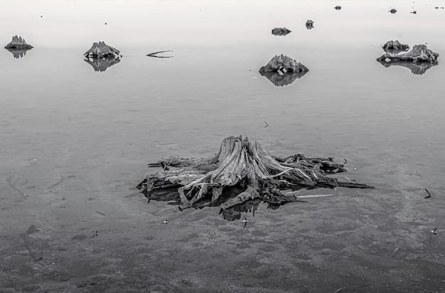 Colpo in scala di grigi delle radici di vecchi alberi sul terreno ghiacciato