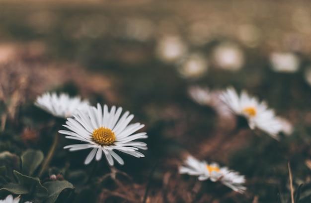 Colpo in stile vintage dei fiori bianchi in giardino durante il giorno