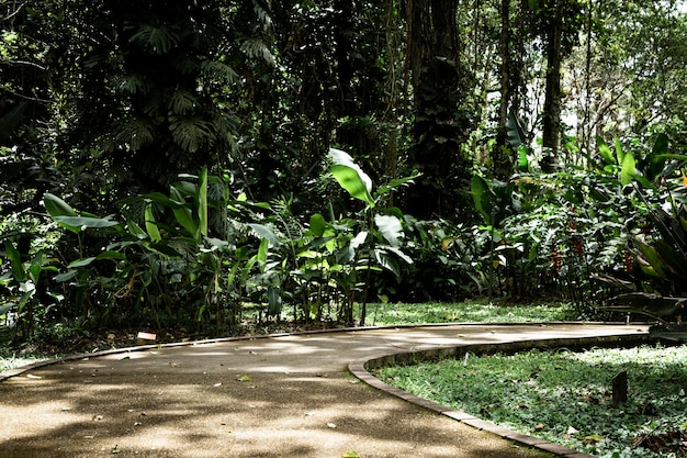 Colpo lungo del bello giardino tropicale