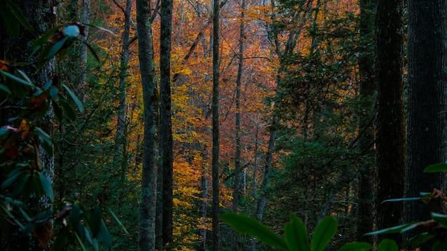 Colpo orizzontale degli alberi in una foresta durante la caduta