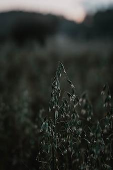 Colpo selettivo verticale del primo piano delle piante verdi del grano in un campo