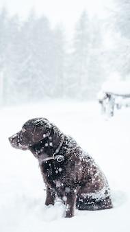 Colpo selettivo verticale del primo piano di un cane marrone di labrador retriever nella neve