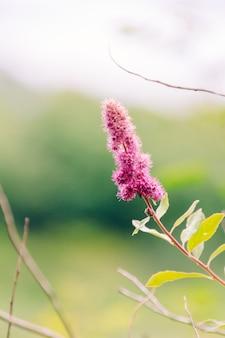 Colpo selettivo verticale del primo piano di un fiore rosa con le foglie gialle