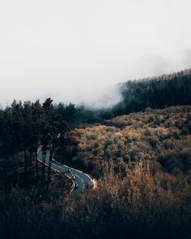 Colpo verticale ad alto angolo di una strada tortuosa circondata da una foresta in una giornata nebbiosa