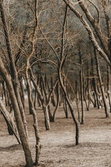 Colpo verticale degli alberi sfrondati in un parco durante l'autunno