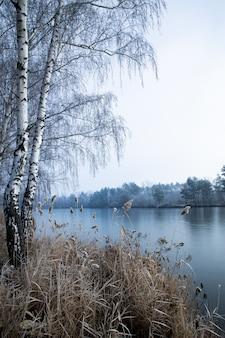 Colpo verticale degli alberi vicino al lago in una giornata nebbiosa in inverno