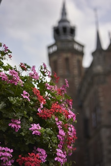Colpo verticale del fuoco selettivo dei fiori rosa con una bella vecchia costruzione