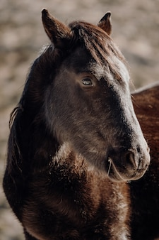 Colpo verticale del primo piano della testa di un bellissimo cavallo marrone