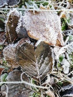 Colpo verticale del primo piano delle piante congelate nella foresta in stavern, norvegia