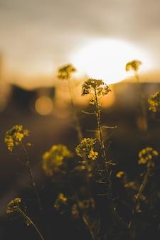 Colpo verticale del primo piano di bei piccoli fiori verdi in un campo con uno sfondo naturale vago