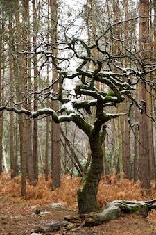 Colpo verticale del primo piano di un albero spoglio coperto di muschio e neve nella foresta