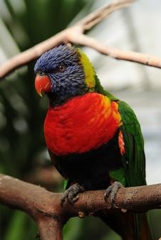 Colpo verticale del primo piano di un pappagallo con le piume rosse, blu e verdi