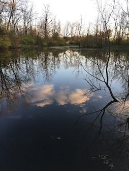 Colpo verticale del riflesso degli alberi e del cielo nuvoloso in un bellissimo lago calmo