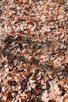 Colpo verticale delle foglie di autunno gialle sulla terra nel mezzo di un parco