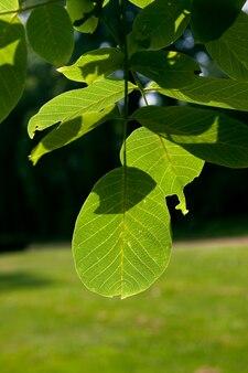 Colpo verticale delle foglie sui rami di un albero su un paesaggio verde