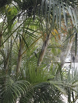 Colpo verticale delle piante di babassu che crescono in un'area urbana