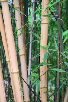 Colpo verticale di alberi di bambù circondati da foglie verdi
