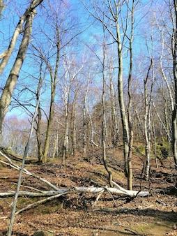Colpo verticale di alberi, fogliame e rami spezzati nella foresta di jelenia góra, polonia