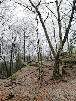 Colpo verticale di alberi nel mezzo della foresta a larvik, norvegia