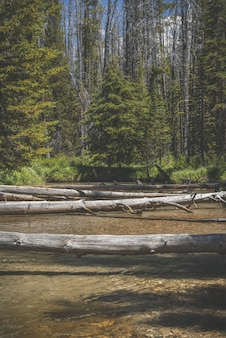 Colpo verticale di alberi rotti sull'acqua con la riva boscosa in lontananza durante il giorno