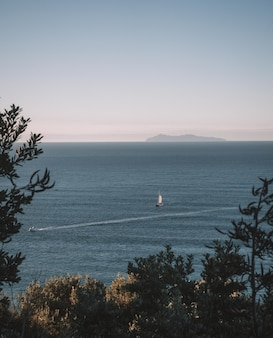 Colpo verticale di alberi vicino al mare con barche e un cielo limpido