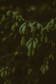 Colpo verticale di bella pianta in una foresta