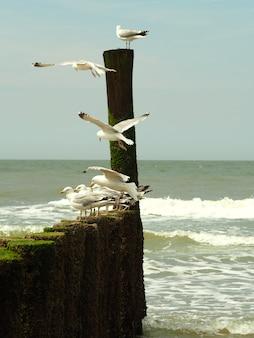 Colpo verticale di gabbiani sulla spiaggia con piccole onde e un cielo cupo in background