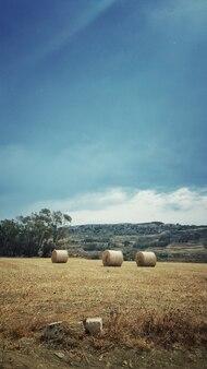 Colpo verticale di hayricks in mezzo al campo sotto il cielo limpido