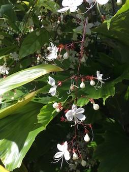 Colpo verticale di piccoli bellissimi fiori bianchi tra le grandi foglie verdi
