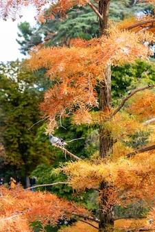 Colpo verticale di un albero di pino arancione con un uccello appollaiato su di esso