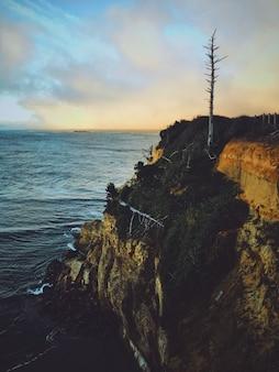 Colpo verticale di un albero secco alto su una scogliera circondata da verde vicino ad un mare