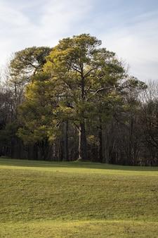 Colpo verticale di un bellissimo albero verde lussureggiante in un campo