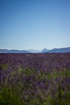 Colpo verticale di un bellissimo campo di lavanda viola con bel cielo calmo e colline nella parte posteriore