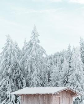 Colpo verticale di un cottage di legno con il bello pino innevato