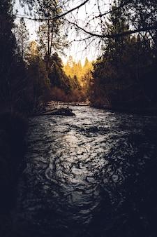 Colpo verticale di un fiume tra gli alberi in una foresta durante il giorno