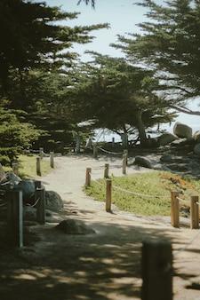 Colpo verticale di un percorso fino alla collina vicino agli alberi in una giornata di sole