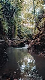 Colpo verticale di un ruscello d'acqua nel mezzo della foresta con alberi verdi