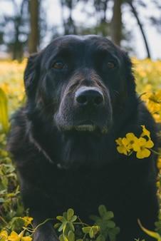 Colpo verticale di un simpatico cane in piedi vicino a fiori gialli