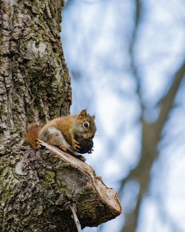 Colpo verticale di un simpatico scoiattolo che mangia nocciola su un albero